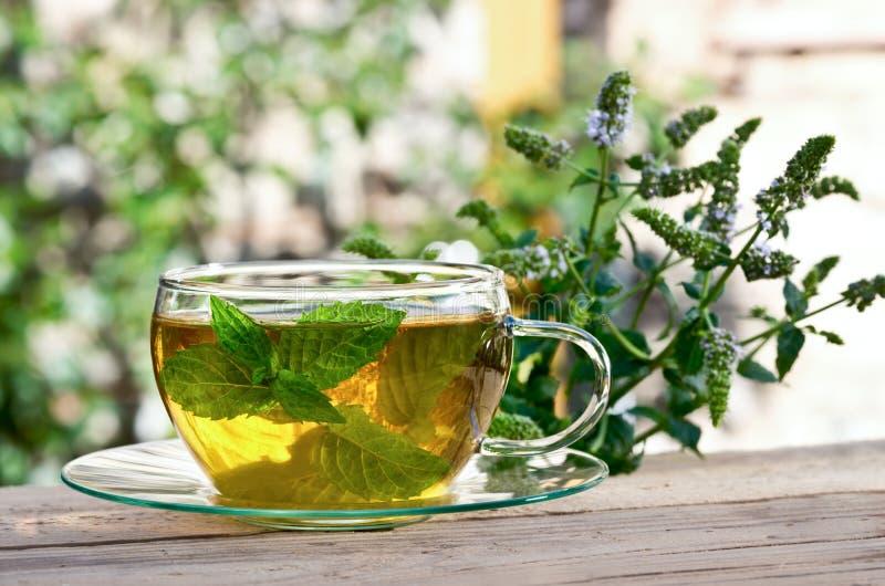 Thé avec la menthe poivrée photos stock