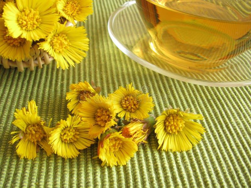 Thé avec le coltsfoot image stock