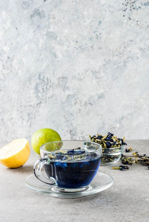 Thé bleu de fleur de pois de papillon photographie stock libre de droits