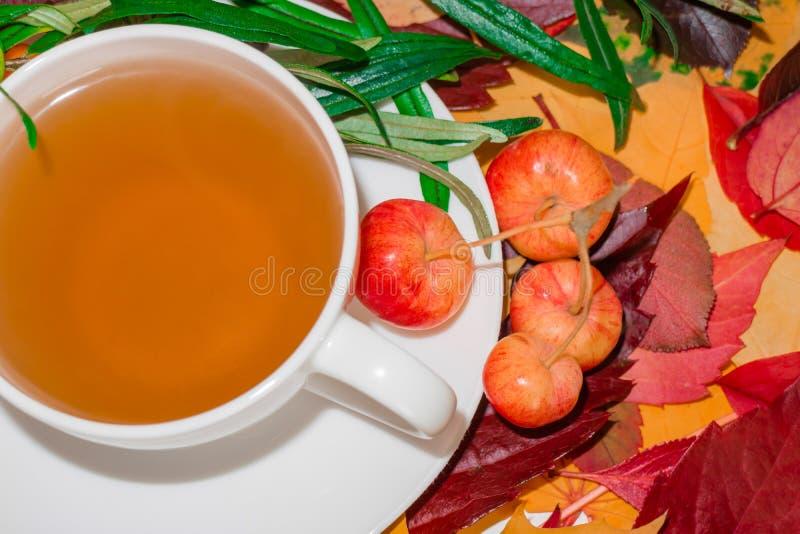 Thé d'automne, toujours la vie avec une tasse de boisson chaude dans la perspective des feuilles tombées photographie stock libre de droits