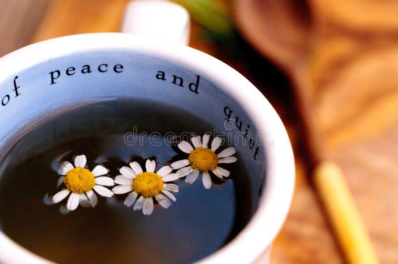 Thé de camomille avec des fleurs de marguerite de camomille photo libre de droits