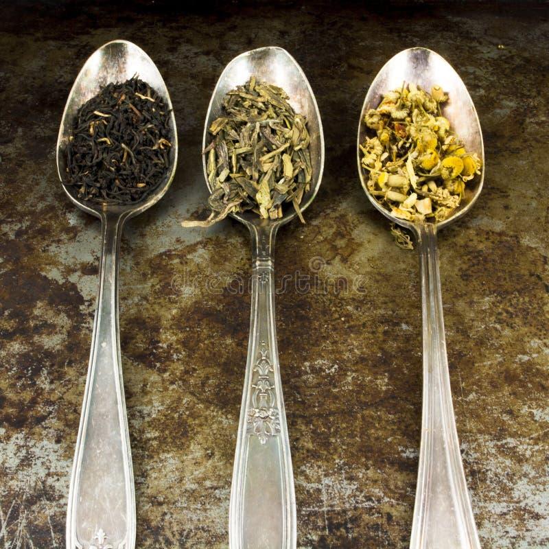 Thé de feuilles mobiles photos stock
