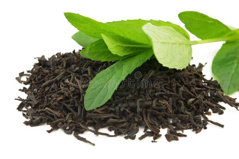 thé en bon état photo stock