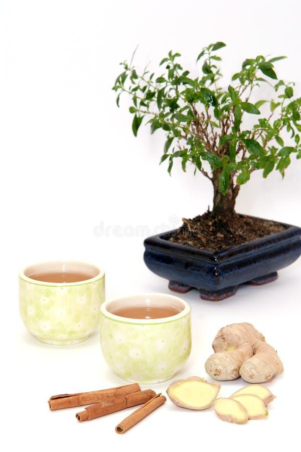 Thé et arbre images libres de droits
