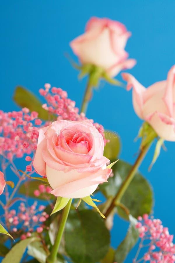 Thé Rose image libre de droits