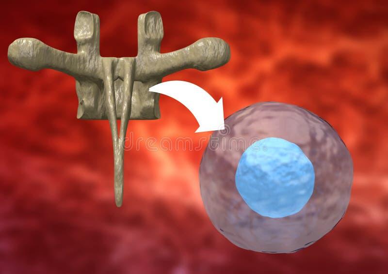 Thérapie avec des cellules souche prises de la moelle pour traiter les maladies du corps humain illustration libre de droits