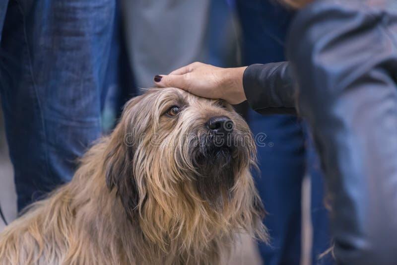 22th国际狗展示希罗纳2018年3月17日,西班牙 库存照片