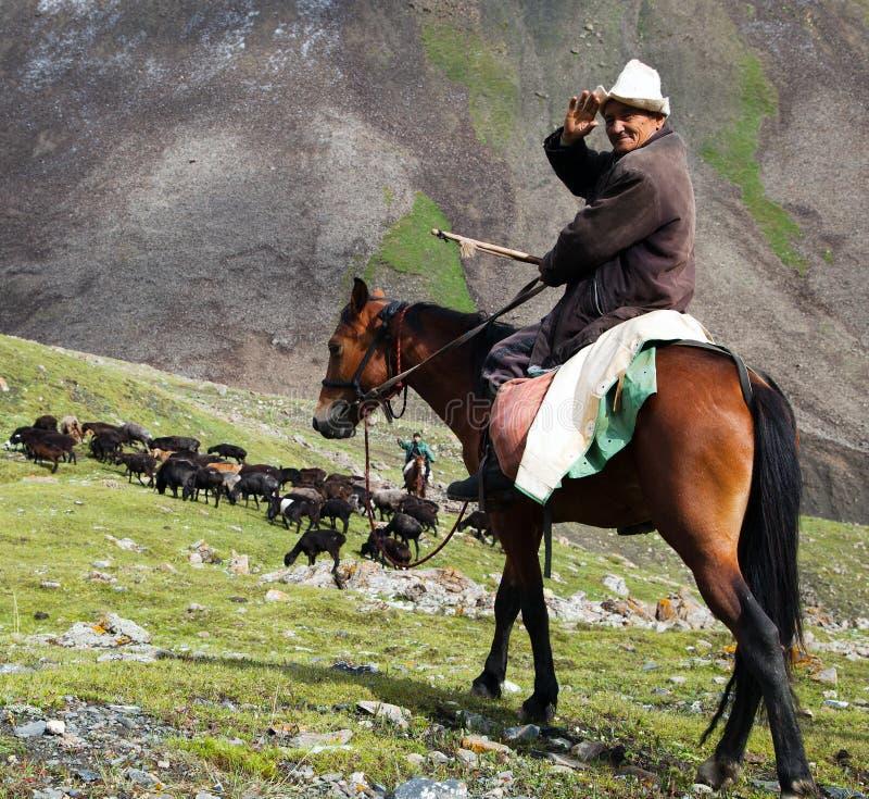 10th из октября 2013 - stockrider с стадом в горах Alay на pastureland стоковые изображения