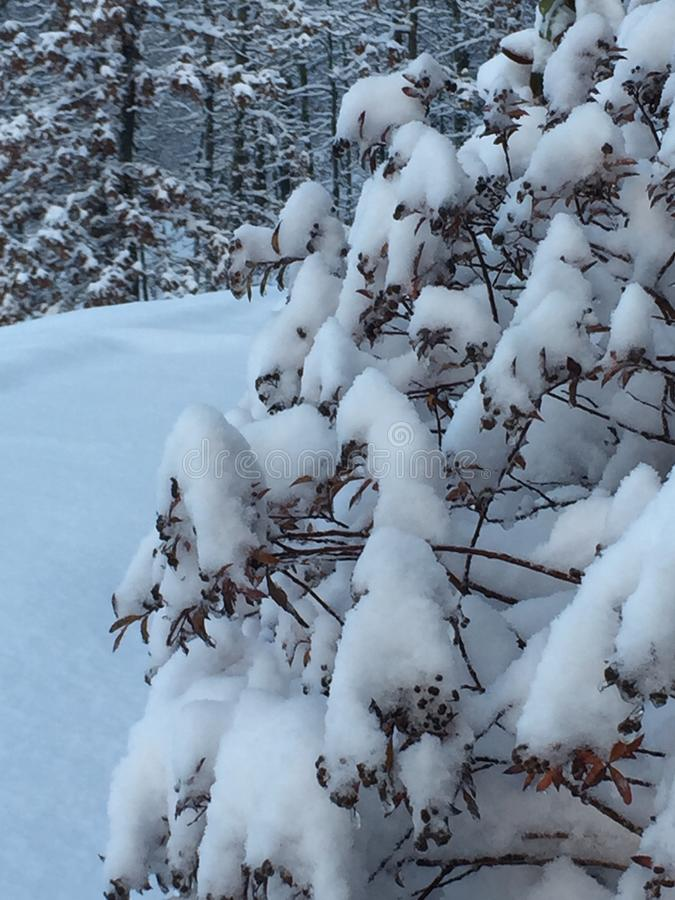 Th ebeuty of snow yet untouched royalty free stock image