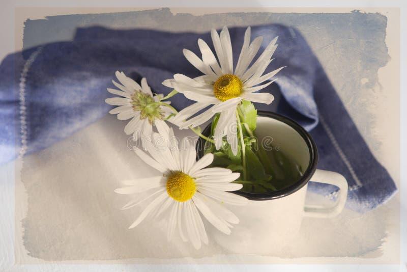 Th stokrotki w białym emaliowym kubku i błękitnej pielusze na białym drewnianym stole obrazy royalty free
