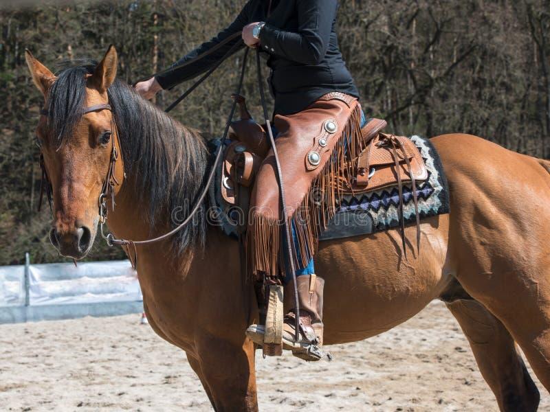 Tha koń z rodeo wyposażeniem obraz stock
