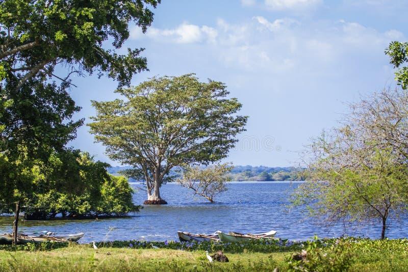 Thabbowa圣所在Puttalam,斯里兰卡 库存照片