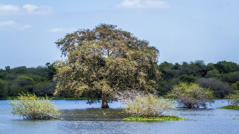 Thabbowa圣所, Puttalam,斯里兰卡 库存图片