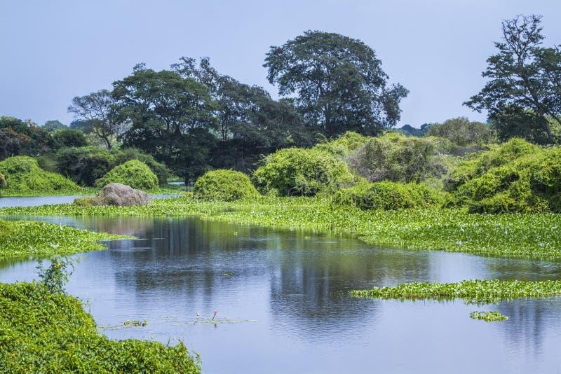 Thabbowa圣所, Puttalam,斯里兰卡 图库摄影