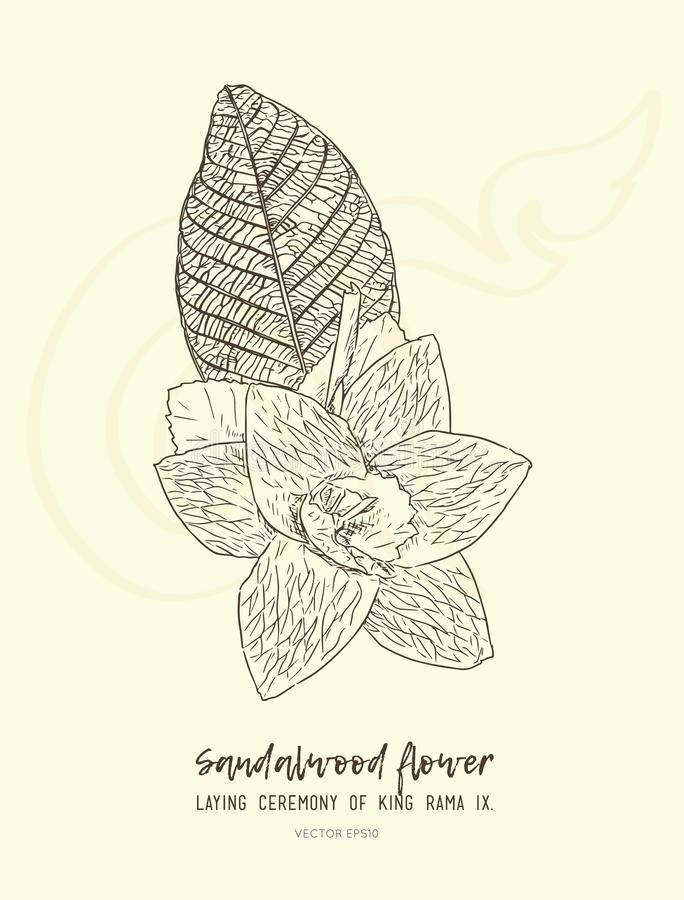 Flower Hand Drawn Doodle Icons Set. Stock Vector ...