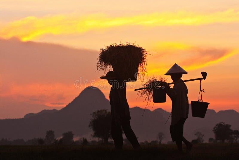 thai bönder royaltyfria bilder