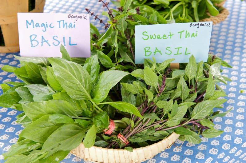 Thai Basil. Just harvested Thai Basil from organic garden at local farm market royalty free stock photos