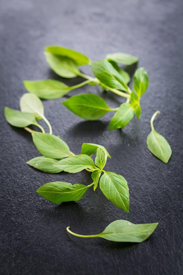 Thai basil leaves. Image of Thai basil leaves royalty free stock image