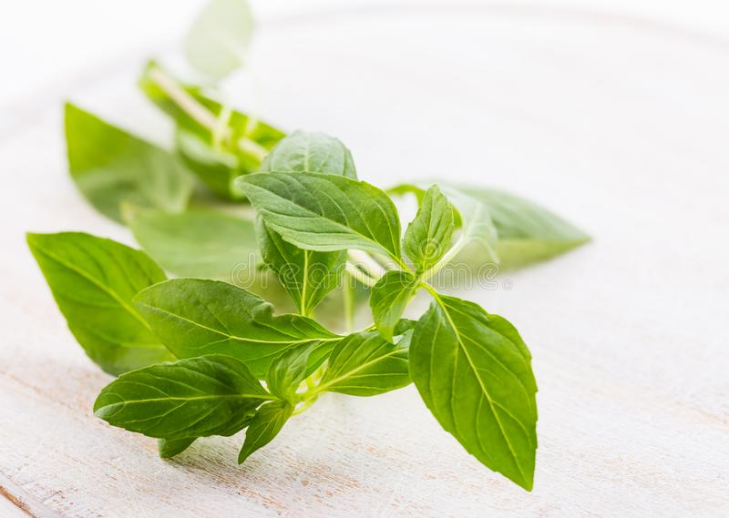 Thai basil leaves. Image of Thai basil leaves stock photography
