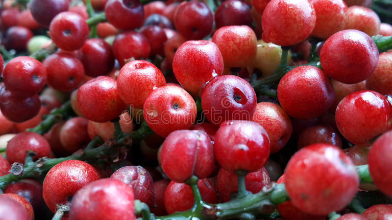Download Thai berry stock image. Image of detail, fruit, green - 43541671