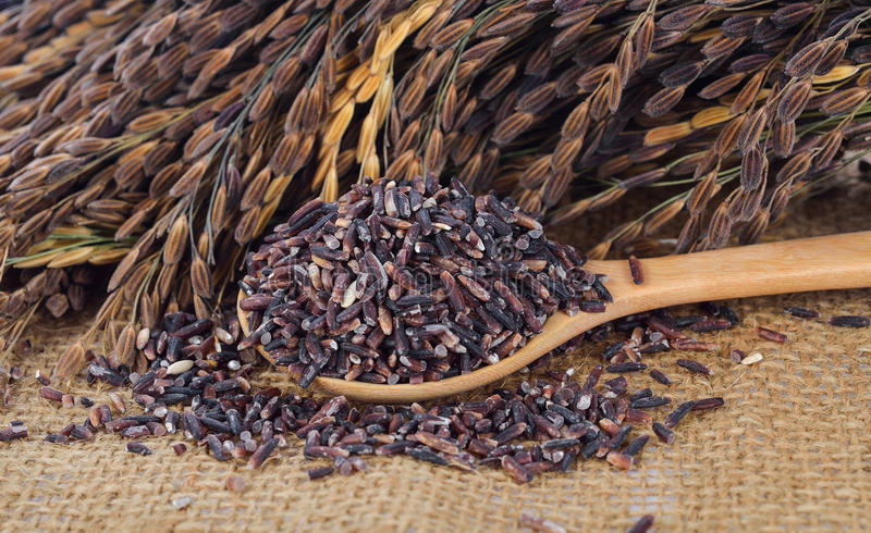 Thai black jasmine rice royalty free stock photo