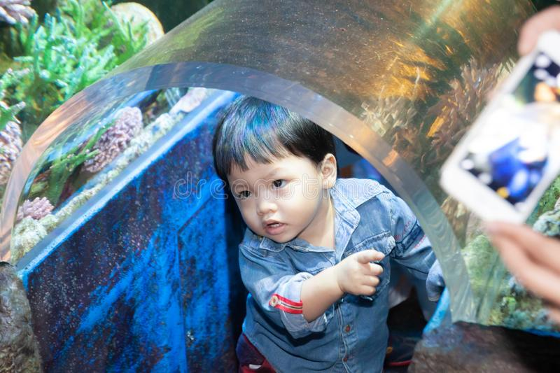 The Thai boy in the aqurium. With curiosity royalty free stock image