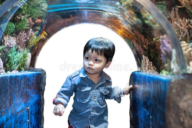 The Thai boy in the aqurium. With curiosity stock image