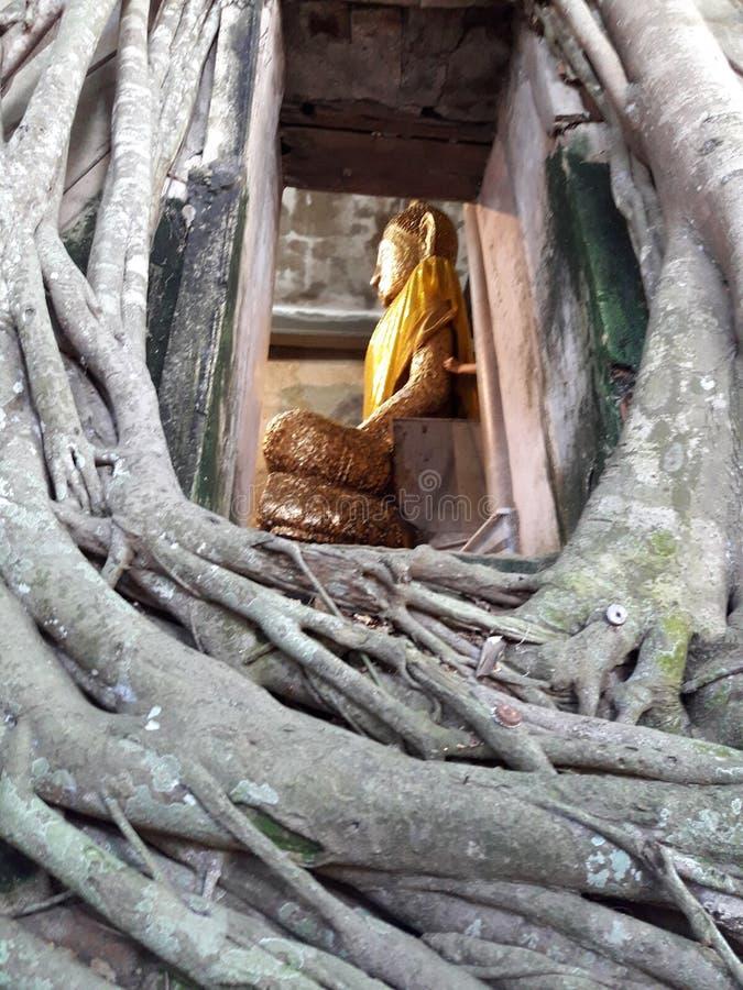 thai buddha staty royaltyfri bild