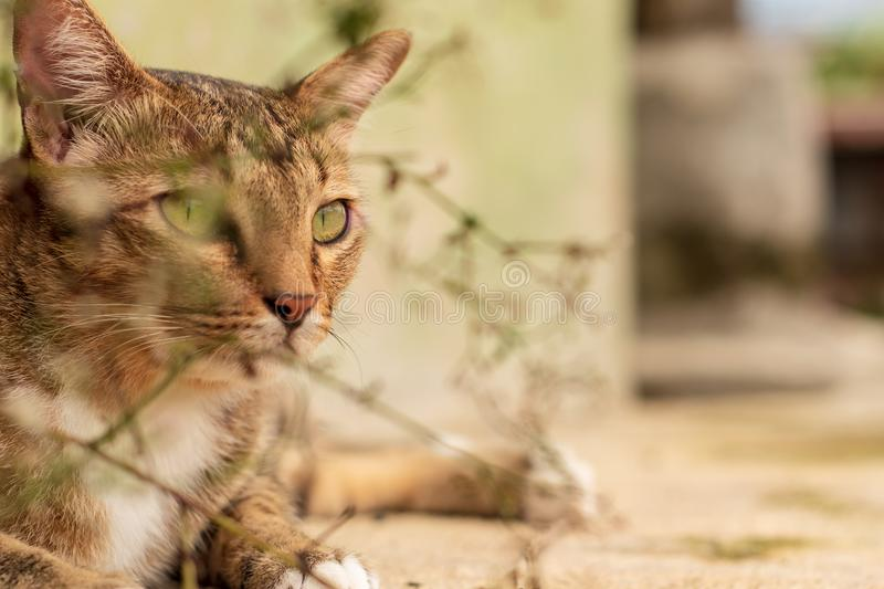 Thai Cat Pattern stock photo
