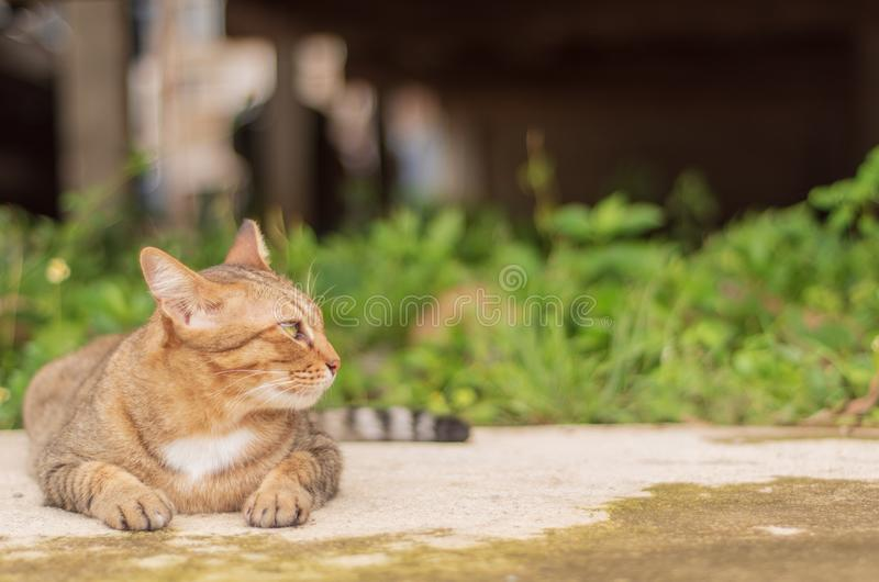 Thai Cat Pattern stock images