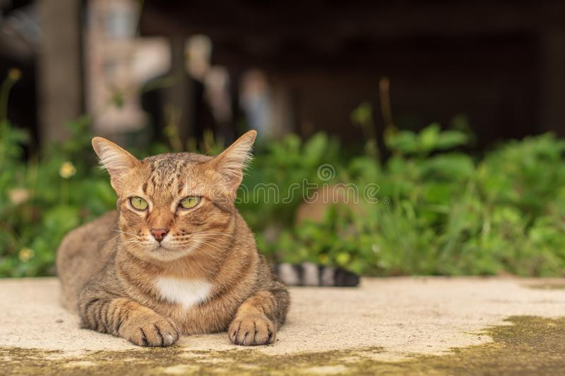 Thai Cat Pattern stock photos