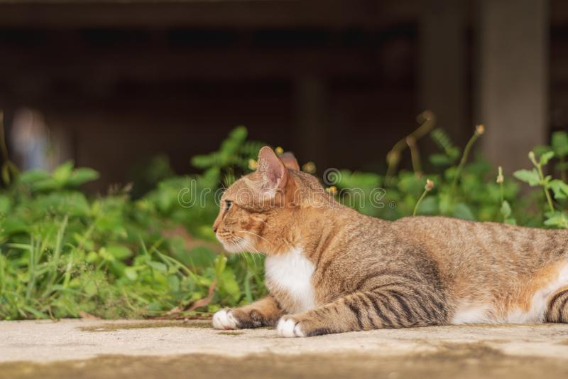 Thai Cat Pattern royalty free stock images