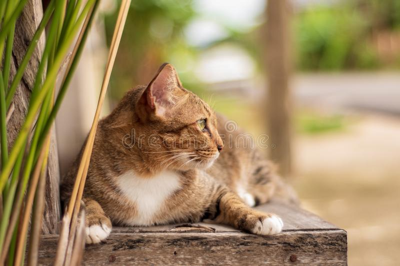 Thai Cat Pattern royalty free stock photo