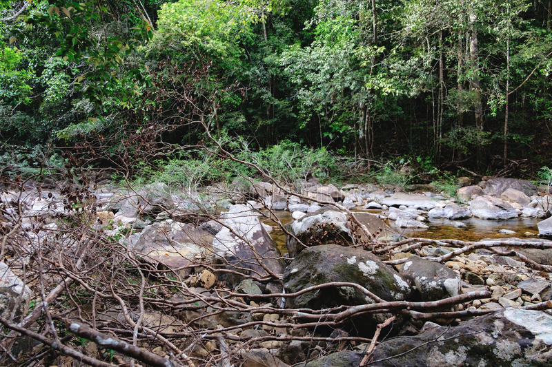 Thai dark tropical forest and rapid mountain river royalty free stock photo