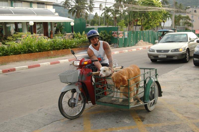 Thai dog lover, Phuket stock images