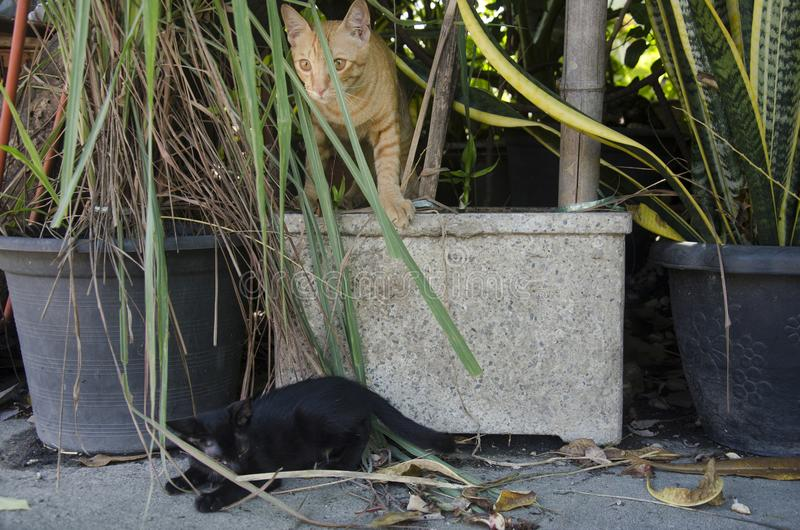 Thai domestic baby cat playing and run and jump in garden stock image