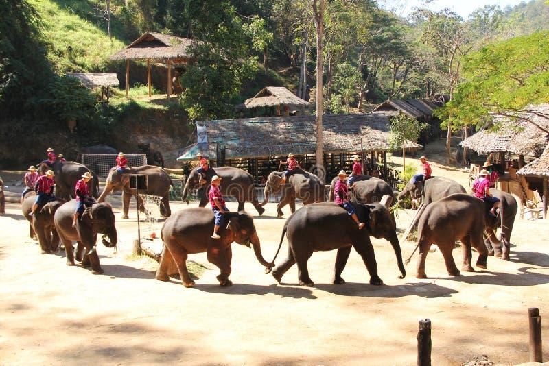 Thai Elephant Show. At Maesa Elephant Camp, Chiang Mai, Thailand royalty free stock photos