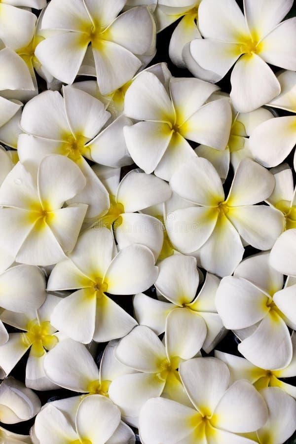 Free Thai Flower Stock Photo - 13789110