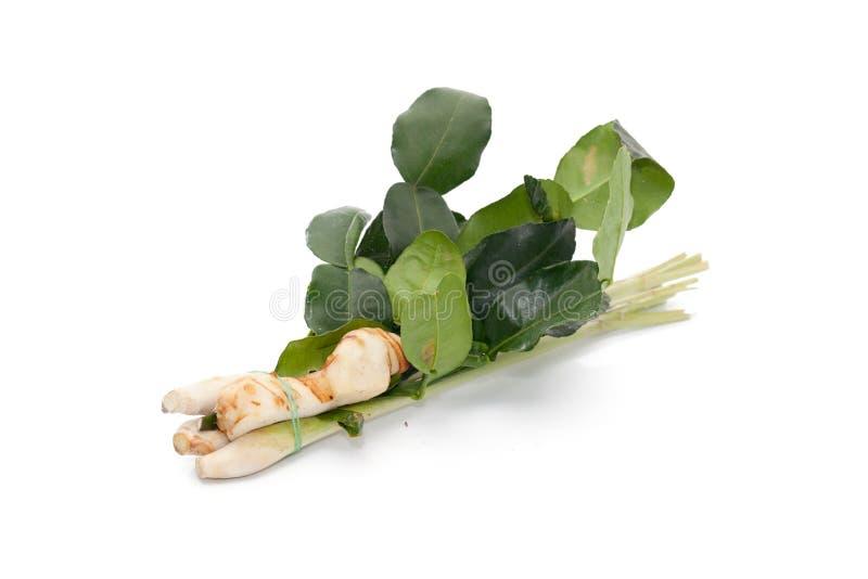 Thai food ingredient for Tom yum ginger,Galangal,lemon grass ,KAF royalty free stock images