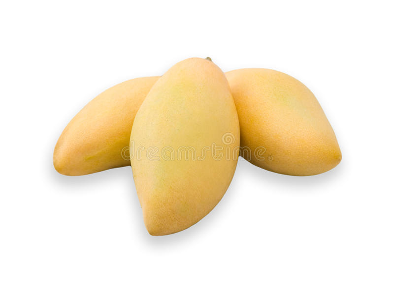 Thai golden mango stock photo