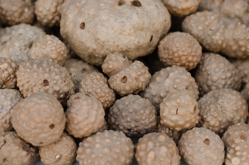 Thai herb name air potato royalty free stock photos