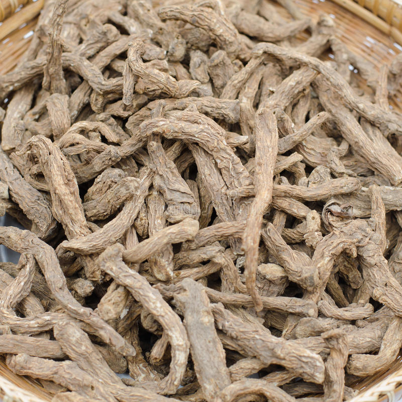 Thai herb scientific name Angelica sinensis Oliv. stock photography