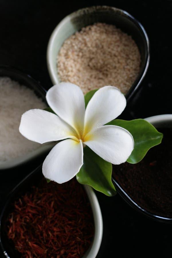 Free Thai Herbs Stock Photography - 5302902