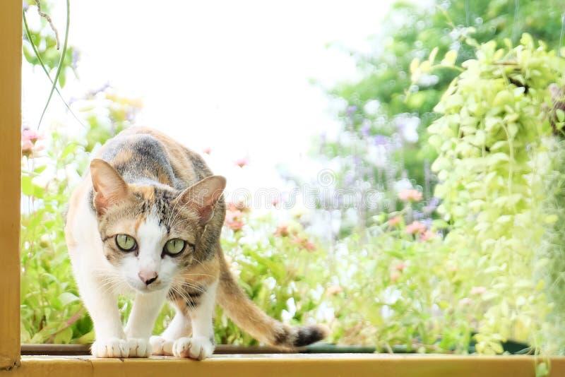 thai katt arkivbilder