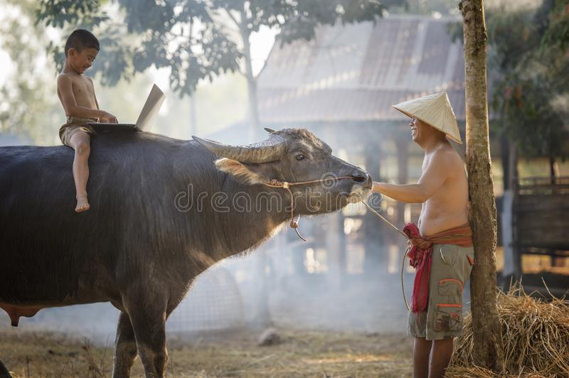 Thai local boy playing notebook on buffalo back stock image