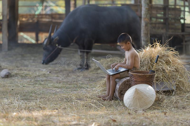 Thai local boy playing notebook on farm and buffalo background royalty free stock images