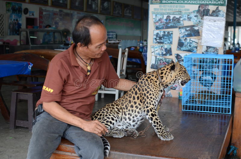 Thai man with young leopard stock photography