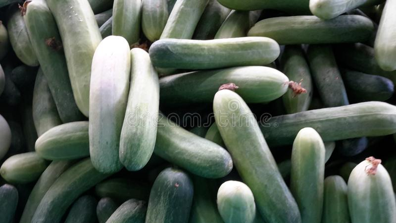 Thai  many  fresh  cucumber  for  herb  drinking  water  and  food royalty free stock image