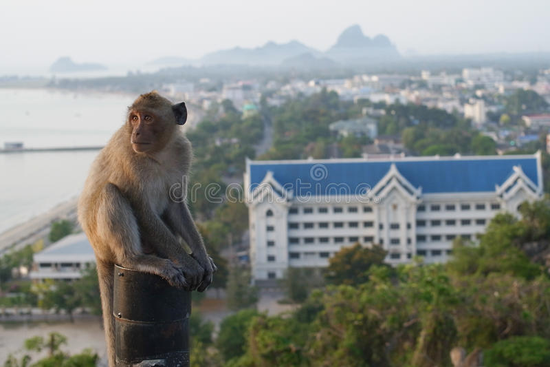 Download Thai Monkey Royalty Free Stock Photography - Image: 28338537