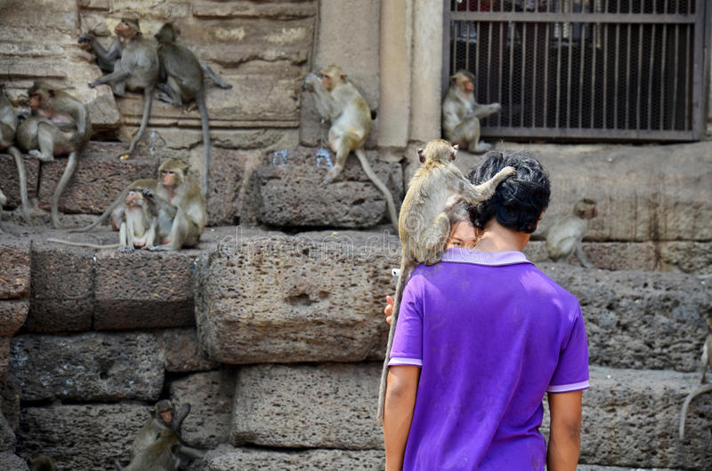 Thai people give food to monkeys at Phra Prang Samyod. On February 23, 2016 in Lopburi, Thailand royalty free stock photography